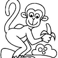 Macacos PB (11).jpg