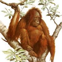 Macacos C (26).jpg