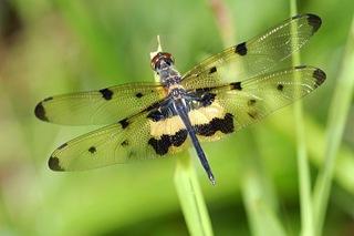 dragonflies_04