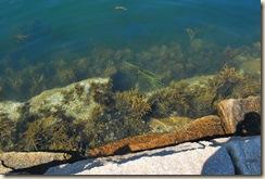 seaweed at breakwater