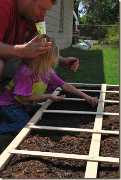 putting in seeds