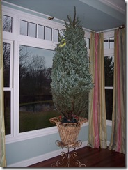 Xmas Tree 2009 014