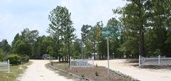 Pine Forest Park 005