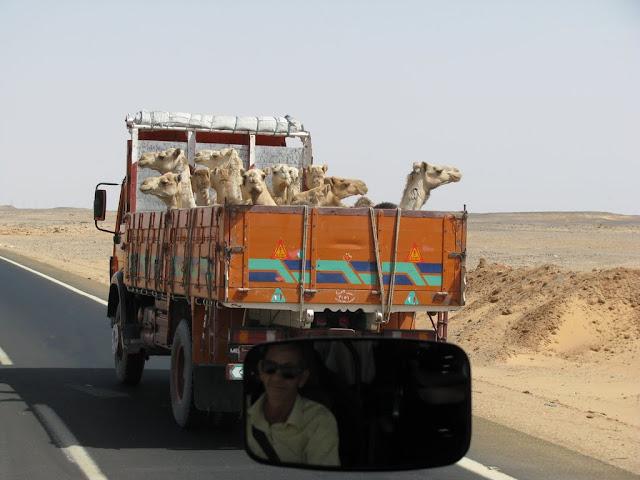 Płd Egiptu