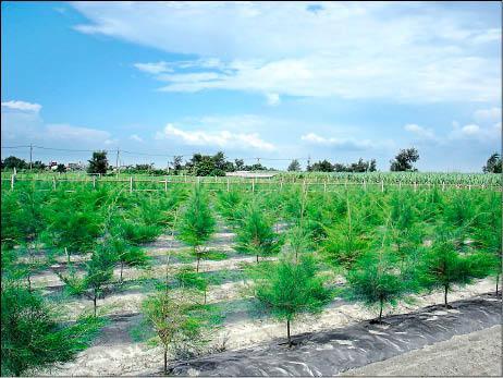 雲林-台塑補助造林1公頃20年可領370萬!