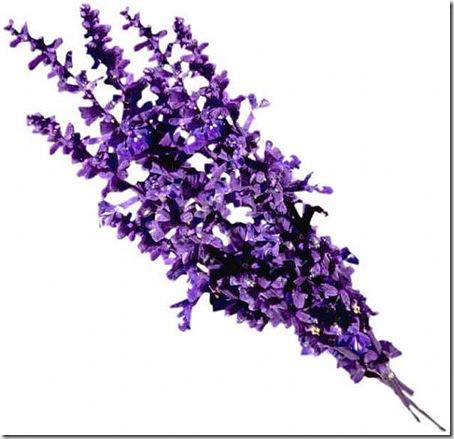 images_lavender