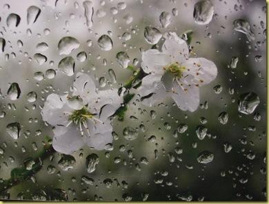 rainbloom