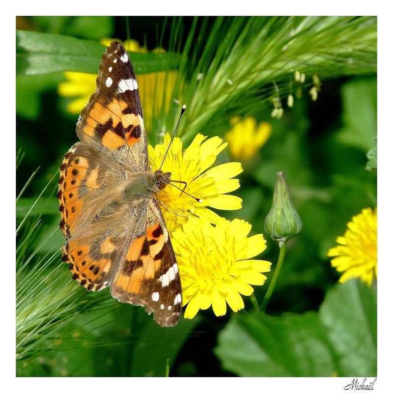 orange marron jaune vert Papillon010509carr%C3%A9