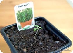 15-04 Rosemary