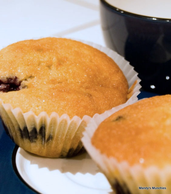 [Blueberry-cupcakes-1[3].jpg]