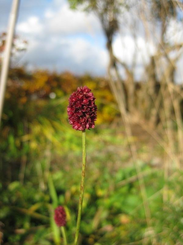 2010-10-31 De mest utholdende blomstene (6)