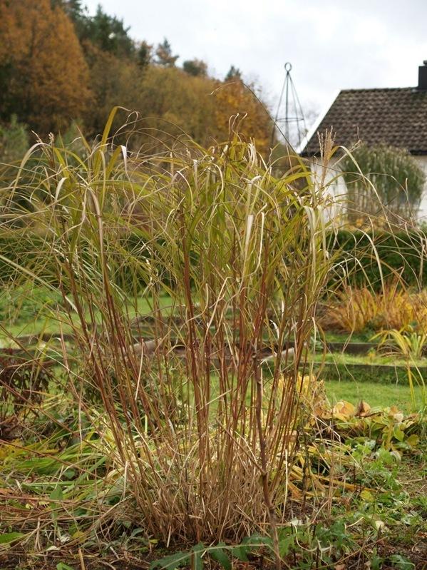 2010-10-30 Hagen (20)