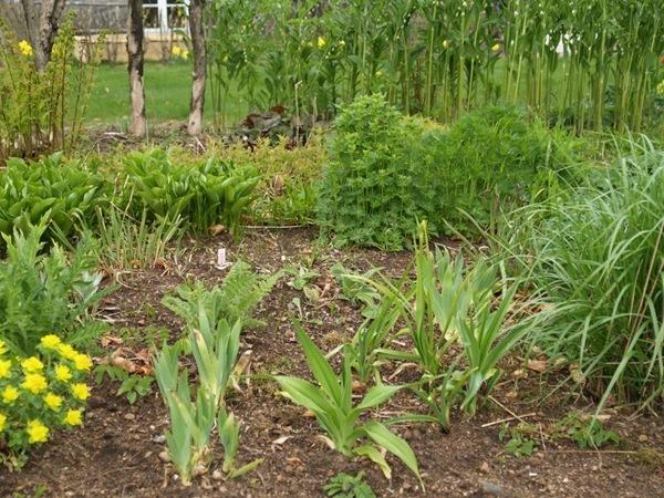 2011-05-06 Hagen i mai (31)