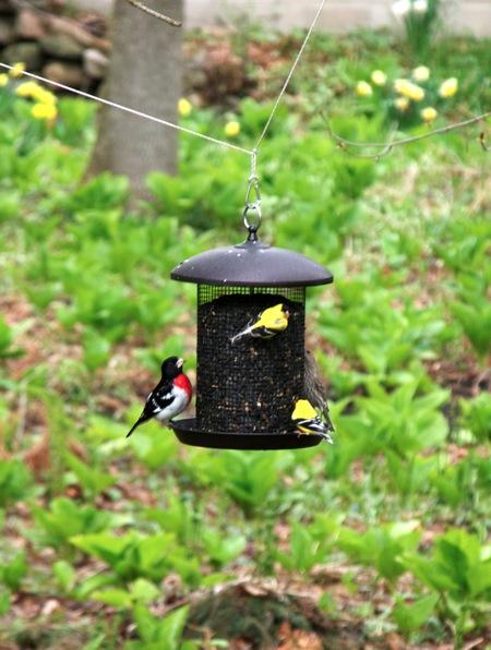 Birds3 051011