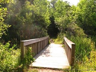 Woodland_20090712_285
