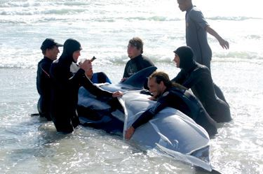 Whales beach in Kommetjie, Cape Town, South Africa.  Rescuers