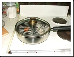 cooking-cat