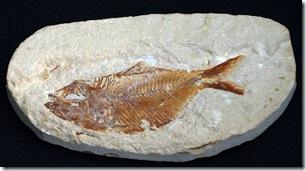pez-fosil