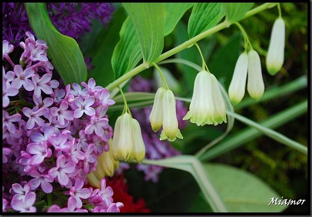 ida-blomster2