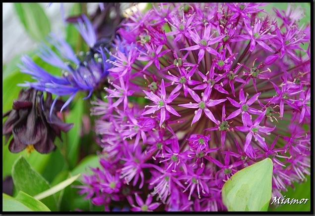 ida-blomster