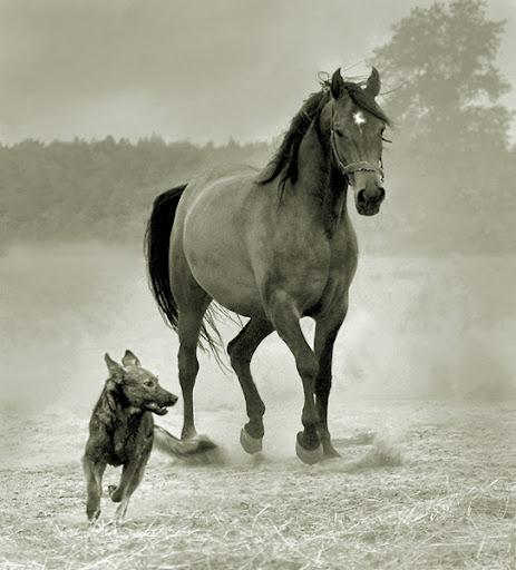 Wojtek Kwiatkowski |Arabian Horses