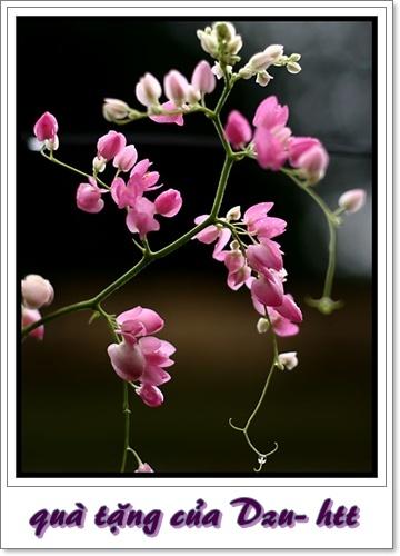 http://lh4.ggpht.com/_h5YaUwVzptM/TL5wOVCkweI/AAAAAAAAAIc/8MAX1W87Rek/tigon_flower.jpg