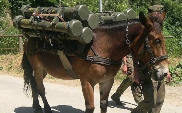 Divirta se com as situações cômicas do exército imagens