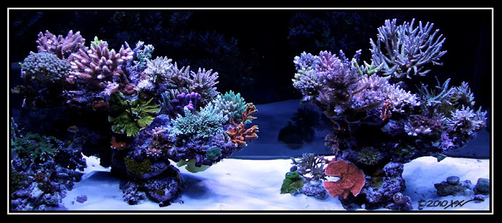 Minimalist Aquascaping - Page 32 - Reef Central Online ...