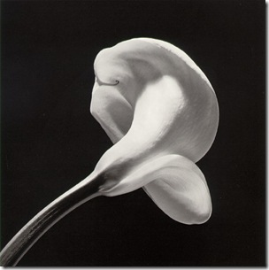 mapplethorpe_calla