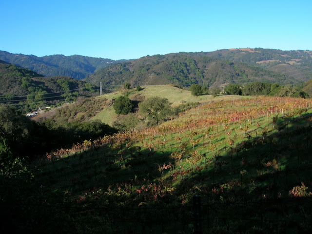 Vinyards and hills