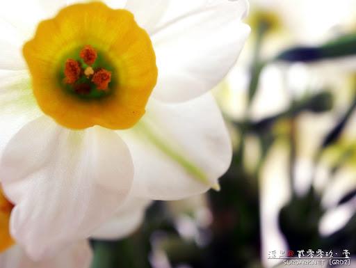 春花之蕊.jpg