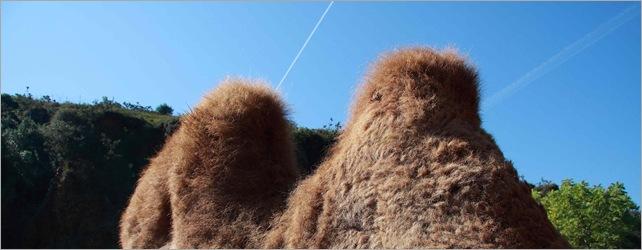 Montañas-peludas