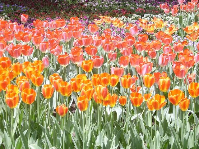 Spring, 2007, Beijing