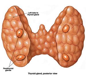 Hiperparatiroidektomy