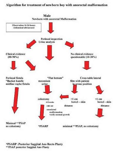 Bagan penatalaksanaan bayi dengan malformasi anorektal