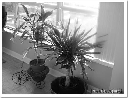 bw plants