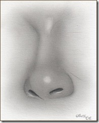 female-nose-pencil-drawing-f5