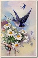 birddaisy001