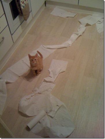beckham toilet paper
