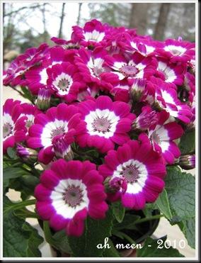 namiislandflowers