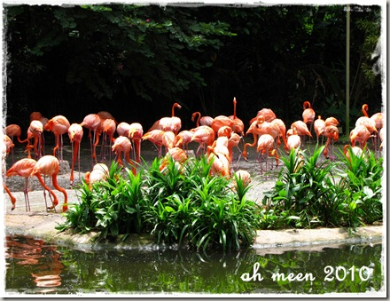 flamingo_birdpark_aug2010