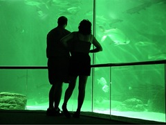couple at aquarium