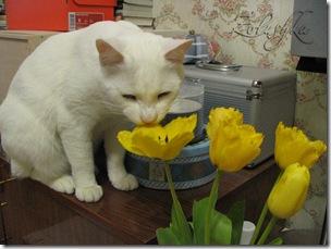 Тюльпановый Томик