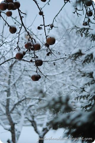 vinter hemma 2010 057