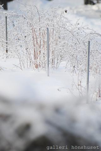 vinterbilder feb 2011 009