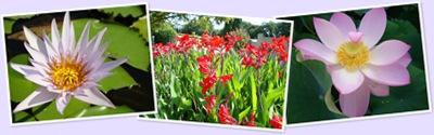Visualizza fleurs4