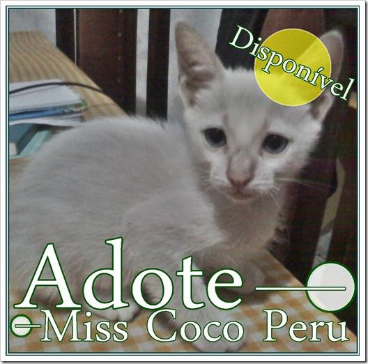 DISPONIVEL miss coco peru
