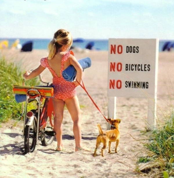 http://lh4.ggpht.com/_hVOW2U7K4-M/Sje6aDWIvgI/AAAAAAABCY8/lp31hm4unuk/s720/me_326_no_swim_dogs_bicycle.jpg