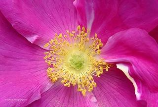 Flower_Macro