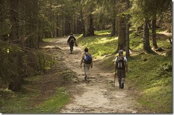 ...sentiero nei pressi della Forcella Calaita